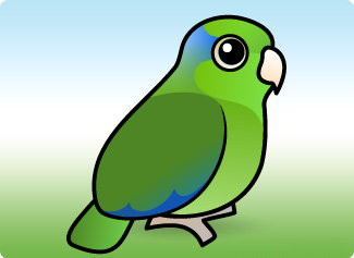 pacific-parrotlet.jpg